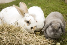 Rabbit Awareness Week (RAW) / Rabbit Awareness Week 2013 runs from 4th -12th May  / by PDSA
