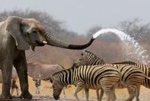 elephants gentle royal giants / Spirit of elephant