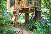Houses in the treetops