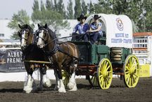 Heritage & Horses / The Theme for the 2015 Medicine Hat Exhibition & Stampede was 'Celebrating Heritage & Horses'.