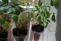 Garden bottle plant
