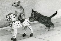 Koty - inne