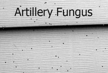 artillery fungus on aluminum siding