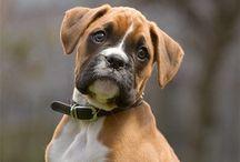 Puppies!!!! (re-Pins)