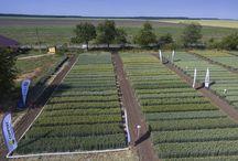 Origin Agriculture