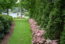Landscaping / Plants, Trees,  and Flowers