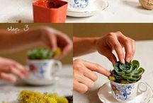 suculentas e plantinhas