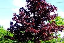 6AP Trees and Shrubs