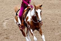 Cowboy paarden