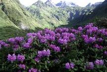 BHUTAN - Landscapes
