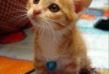 Оранжевые Котята