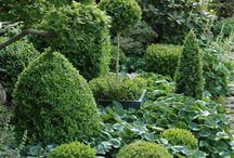 Förslag växter vid staket södersol