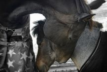 Horse Photography / All pictures are shot&edited by me, Micha van Neerwijk. (All images are copyrighted!)
