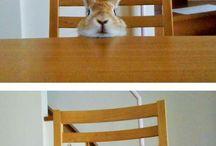 I love bunnies ♡