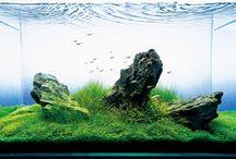 When i get My Aquarium / by Melanie Formosa