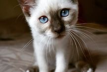 catscatscats