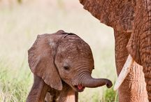Elephants / My favorite Animals