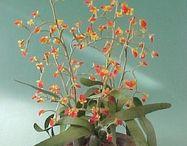 Miniature 1/12: FLOWERS / by Ketty Pierro