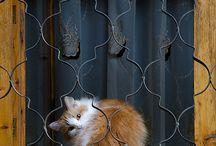 Cats n animAls