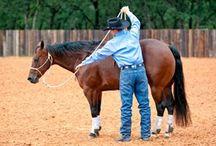 Equine Stretching Exercises