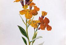 Flower Tattoo / Wallflower = Optimism Poppy = beauty Rosemary = gratefulness, everlasting love Rose = Love