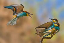 Nature / by Jordana Stephens