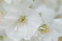 Spring - kevättaika