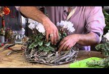 Bloem & Plant ( Binnen) / Oa veel You Tube filmpjes en andere leuke voorbeelden voor in huis.