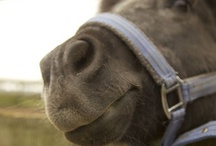 Tina / My beautiful pony Tina!