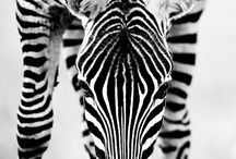 Animals / by Michaela Cooper