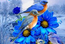 chant d oiseau