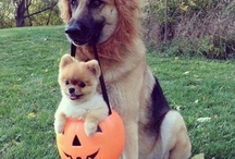 Pets Halloween!