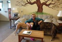 Our new Furever Familes! / Pictures of our Greyhounds with their new Families