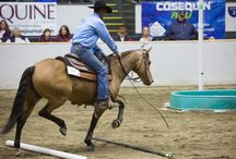 Versatile Horse & Rider Competition at the 2015 Massachusetts Equine Affaire / Equine Affaire's ultimate test of horsemanship, the Versatile Horse & Rider Competition (VHRC), will return to the 2015 Equine Affaire at the Eastern States Exposition this November.  A select group of riders and horses will compete for $5500 in cash and other prizes and the coveted title of Champion at the 2015 Versatile Horse & Rider Competition which will be conducted on Thursday and Friday, November 12th and 13th, during Equine Affaire.