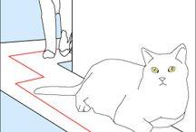 Casa: gatte