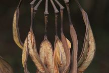 SEED PODS ΚΛΠ...