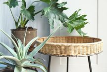 Indoor plants / Plant stands