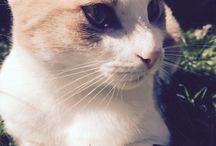 My model cat Ella / Modeling 100%