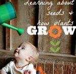 Plants/Seeds