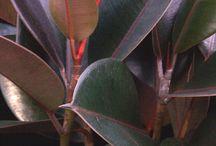Indoor plants / by Wendy Koh