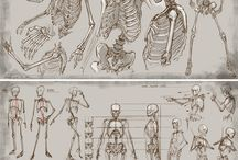 ANATOMY / Body parts