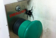 Things that Scare Me. / pictures of things that make me want to run shrieking into the night.