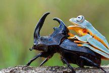 zvieratká v akcii