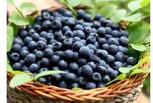 Yabanmersini( Blueberry) / Her derde deva yabanmersini harikaları
