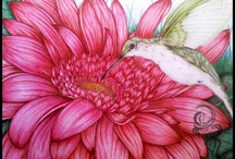 Pencil drawings birds
