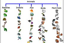 Animal Classification