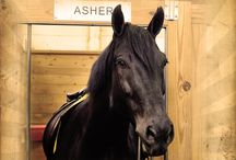 Our Police Horses / Get to know the equine officers of Portland's Mounted Patrol Which is your favorite?