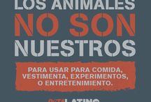 Animals are not ours to eat, wear, experiment on or use for entertainment