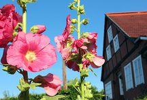 Lauenburg, Stadt der Rosen