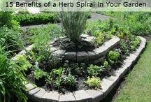 Herb's garden